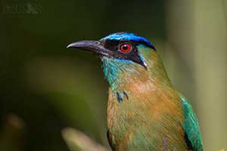 Costa Rica, Monteverde – March 2016