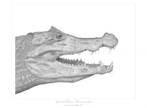 Drawings (prints)