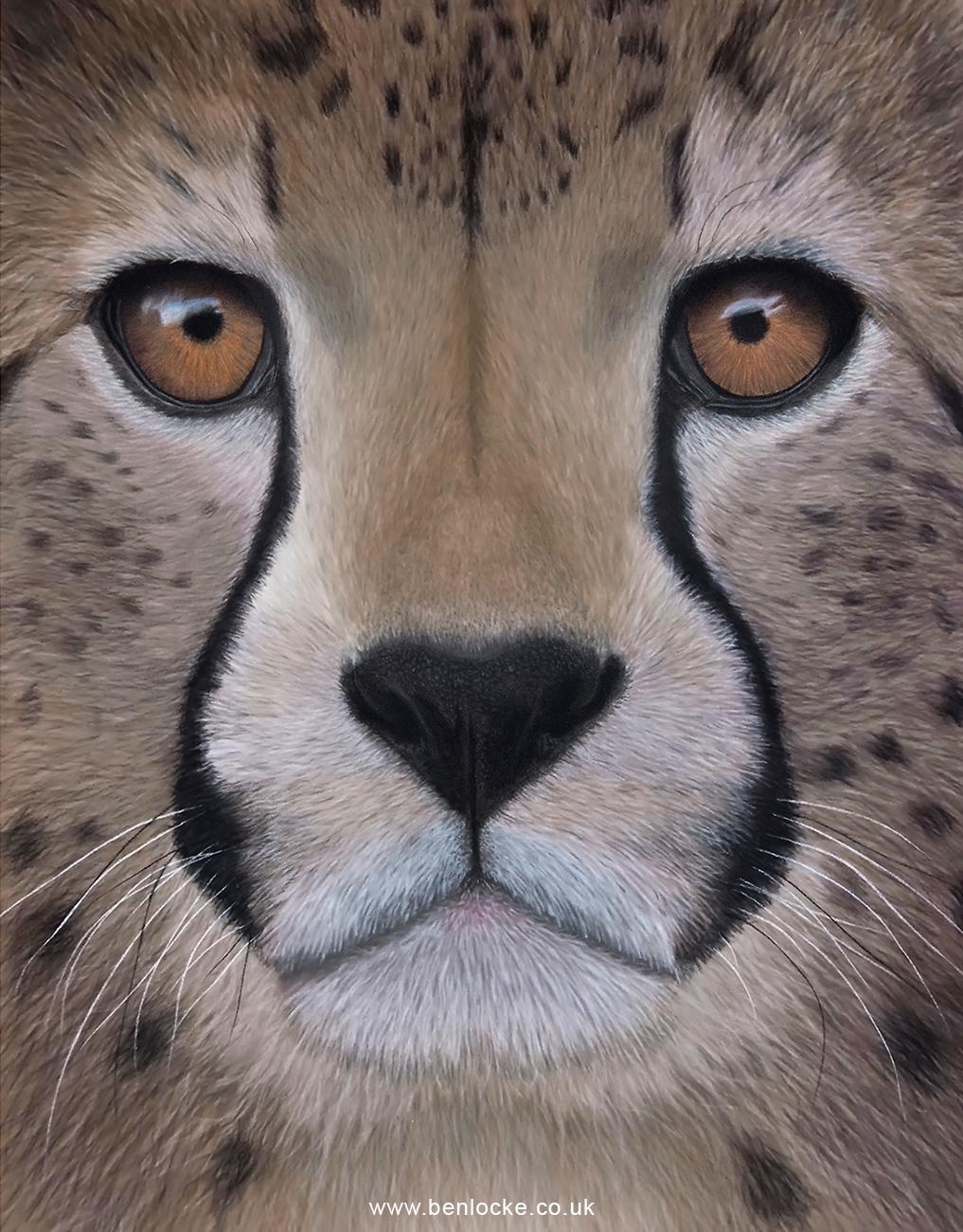 Cheetah complete