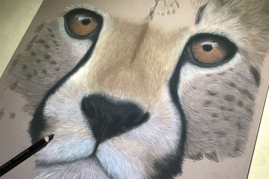 Cheetah in progress