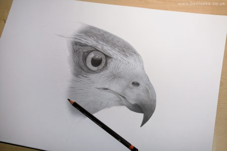 Goshawk in progress