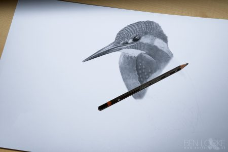 Kingfisher in progress