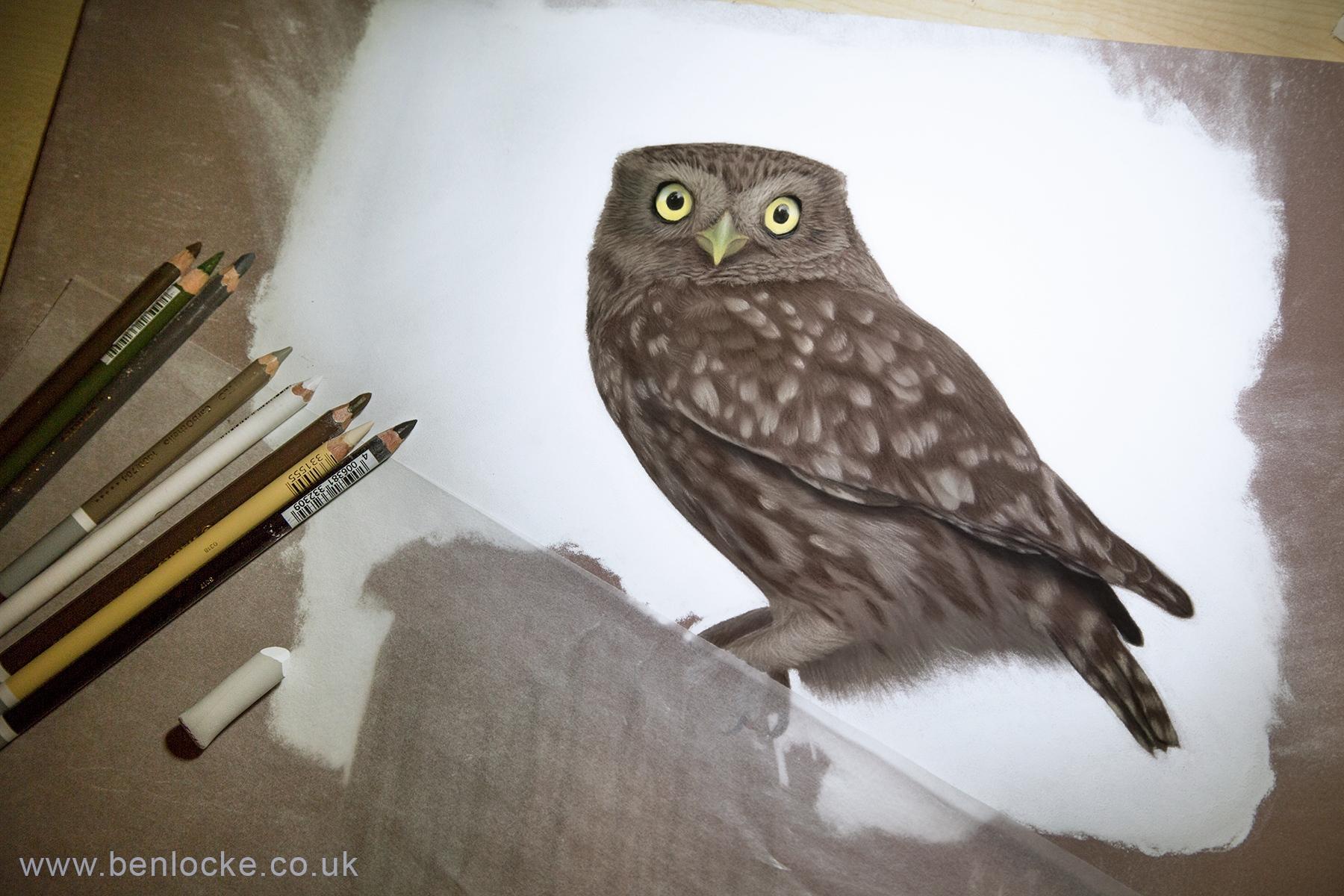 Little Owl in progress