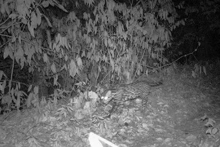 Costa Rica – trail-cam update pt.1
