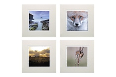 "Limited Edition Mounted Prints (5x5"" for 8x8"" frame)"