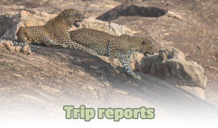 Trip reports