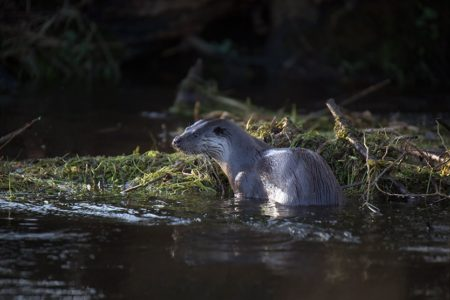 Otters, Nightjars and a new year
