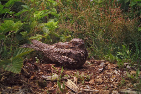 2019 Nightjar season summary