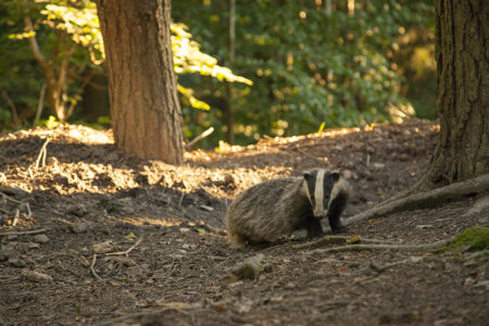 Muggers, Badgers and Dippers