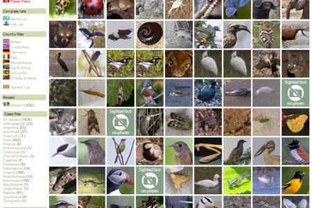 Species List mosaic