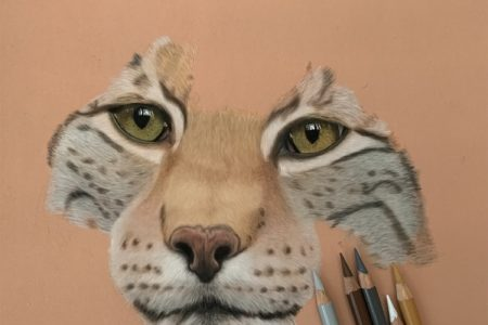 Eurasian Lynx in progress