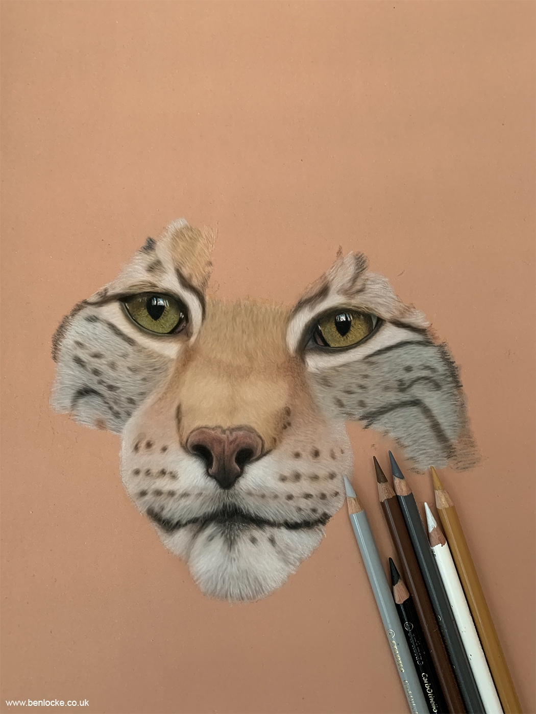 Eurasian Lynx in progress