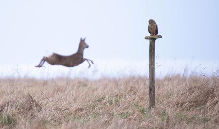 Owls, Deer, Starlings & Nile Monitors